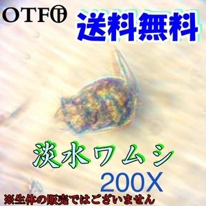 淡水ワムシ乾燥卵カプセル(約2万個以上) 3カプセル