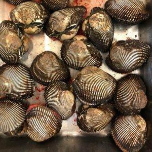 赤貝 殻付き 1kg (約4-7個) アカガイ