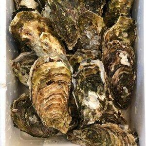 カキ 殻付かき 20粒 牡蠣