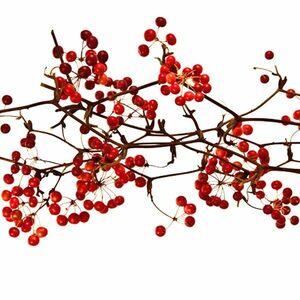 京都産 栽培用サンキライの種 30粒 / 山帰来 サルトリイバラ 実生栽培 赤い実や蔓をリースやスワッグに