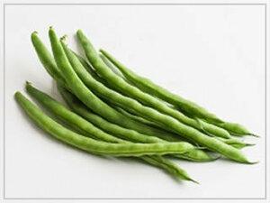 [送料無料・無農薬・種]つるありいんげん 100粒 ◆自然栽培 自然農 農薬不使用 不耕起 無肥料 種子