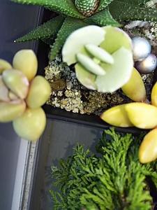 即決 多肉植物 福袋 セット 点 まとめて 観葉植物 植木 園芸