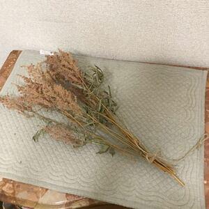 アスチルベ ピンク ドライフラワー 花 ハーバリウム