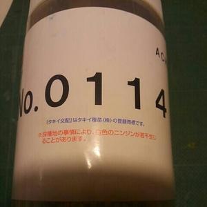 人参の種 夏蒔き品種 品種名no.0114 約150粒