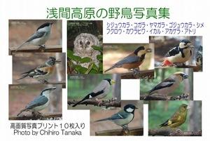 +【浅間高原の野鳥写真集】10種類 b-01-02