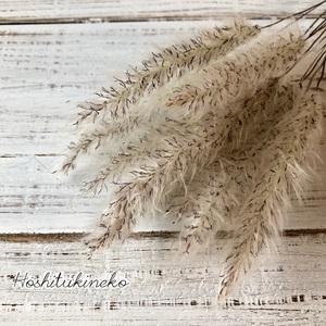 チガヤ ショート10本セット 7~9cmナチュラル ドライフラワー花材 ハーバリウム スワッグにおすすめ 星月猫