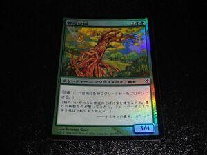 FOIL/雲冠の樫/Cloudcrown Oak/ローウィン/日本語版/MTG1枚