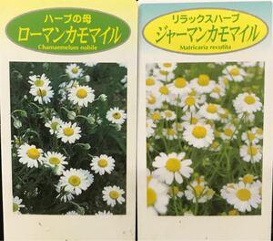 カモミール ハーブ苗 2品種