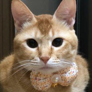 ペット用品、猫シュシュ、犬首輪、鈴付き、イエロー色
