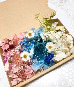 フレンド3カラー*ハーバリウム花材ドライフラワー 花材詰め合わせセット