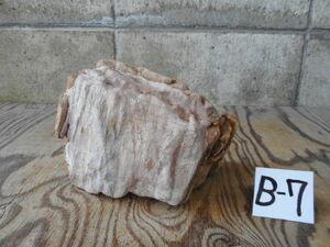 伊勢  ヨロイ石(21㎝)  3,9㎏ B- ⑦    鎧石 水石 鑑賞石 盆石 盆裁