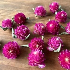 千日紅ヘッド15個 ピンク ラズベリーフィールド ドライフラワー花材 ハーバリウム リース ボタニカルキャンドルなどに 星月猫