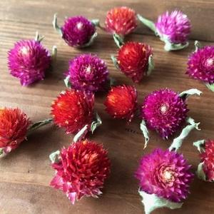 千日紅ヘッド14個 ピンク&レッド各7個づつ ストロベリーフィールド ラズベリーフィールド ドライフラワー花材  星月猫