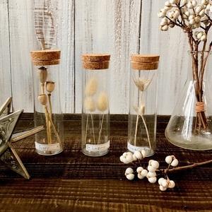 星月猫★3本セット「20種類から選べる植物標本」ドライフラワー パンパスグラス、ミモザ.バラ、貝細工、千日紅、ラムズイヤーなど