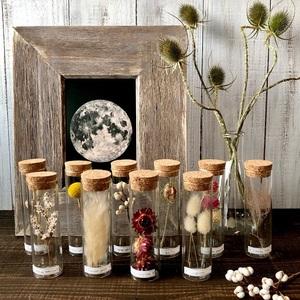 星月猫★10本セット「20種類から選べる植物標本」ドライフラワー パンパスグラス、ミモザ.バラ、貝細工、千日紅、ラムズイヤーなど