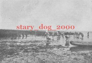 複製復刻 絵葉書/古写真 東京 品川の海苔採集 明治40年 TS_151
