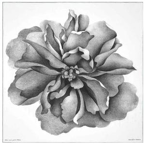 1515 新品 エルメス カレジェアン140 アルマのバラ グレー グリーン カシミア シルク ショール 大判ストール レディース メンズ スカーフ