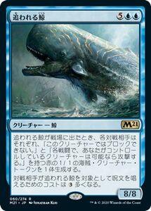 MTG 追われる鯨 レア 基本セット2021 M21-060 ギャザ マジック・ザ・ギャザリング 日本語版 クリーチャー 青