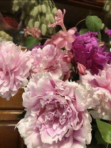 ピオニー 芍薬 淡いピンク 2~3芽付割株 シャクヤク