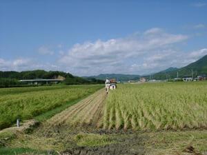 令和3年産新米 コシヒカリ玄米10kg 精米と分搗き精米対応 産直