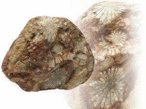 【蔵】鑑賞石 菊花石 重さ約9キロ 天然石 鑑賞石 飾り石 S202