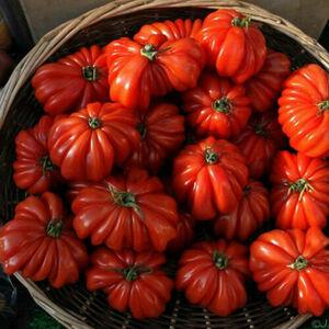 ★ ホット トマト の 種子 ( 10 種子 ) HOT TOMATO ★