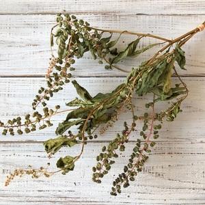 ヨウシュヤマゴボウの実付き枝 3本セット ドライフラワー花材 リース スワッグ そのままインテリアなどに 星月猫