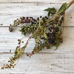 ヨウシュヤマゴボウの実付き枝(完熟タイプ) 3本セット ドライフラワー花材 リース スワッグ そのままインテリアなどに 星月猫