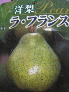 ラ フランス 洋梨苗木
