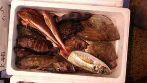 (魚)青森産混じり魚5.0kg3890円即決