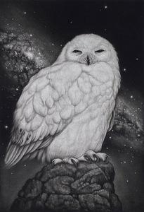 生田宏司「星の降る夜」銅版画 メゾチント 額装 ふくろう 宇宙 銀河