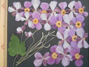 [ prompt decision * pushed flower material ]shuumeigik( autumn Akira .) ②