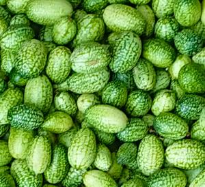 マイクロキュウリ 10粒 種 種子  野菜  家庭菜園 キュウリメロン