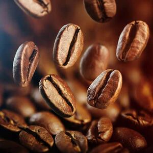 ★ コーヒー の 種子 ( 6 種子 ) COFFEE SEEDS ★