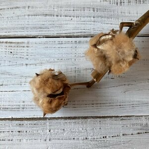 コットンフラワー 1本 2ヘッド 高クオリティ ドライフラワー 花材 ブラウン 綿花 綿の花 綿の実 インテリア撮影小物★星月猫