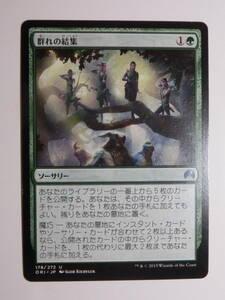 【MTG】群れの結集 日本語1枚 マジック・オリジン ORI アンコモン