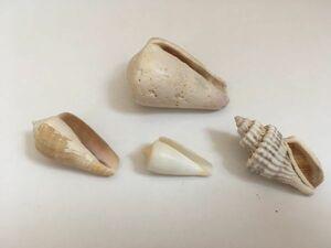 ② 貝殻 インテリア 工作 アクセサリー用に 海岸 自然 沖縄
