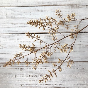 ナンテンの花蕾枝 50cm ナチュラルホワイト1本 厳選高品質ドライフラワー 花材 そのままインテリアなどに ★星月猫