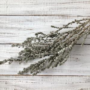 カポクボス 50cm ふわふわのシルバーリーフ2本 厳選高品質ドライフラワー 花材 そのままインテリアなどに ★星月猫