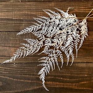 レースファーン ホワイト 約30~43cm そのまま飾れる3本セット ドライフラワー 花材 インテリアなどに ★星月猫
