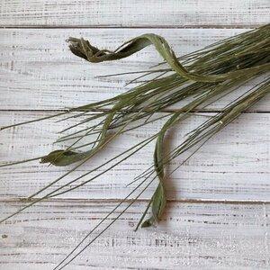 石化エニシダ 55~58cm 1本2分割 高クオリティ ドライフラワー 花材 そのままインテリアなどに ★星月猫