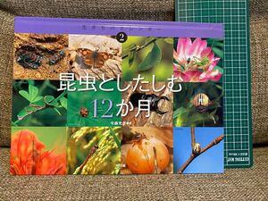 昆虫としたしむ12か月(生き物カレンダー)