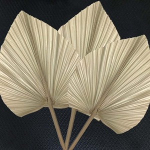 【送料無料】芸術の作成に欠かせません☆天然 ヤシ 葉 5枚 乾燥 ドライフラワー 植物 花材 アート 装飾 インテリア 飾り おしゃれ