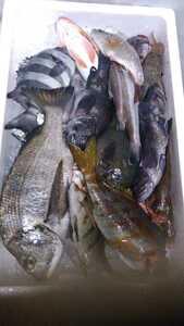 (魚)青森漁師さんのびっくり玉手箱「朝とれ魚介類」1k980円即決