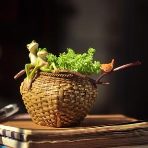 ◆最安にします◆ミニ プランター 蛙 可愛い 植木鉢 多肉 植物 カエル 鳥 小物 インテリア ガーデン 庭 バスケット リビング 玄関 AT7497