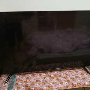 SHARP 液晶テレビ シャープ AQUOS 4K BH1 4T-C50BH1