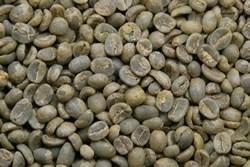 【1㎏】コーヒー生豆 グァテマラ アンティグア ラ・アゾテア農園 SHB プレミアムコーヒー 自家焙煎 カフェ 送料無料