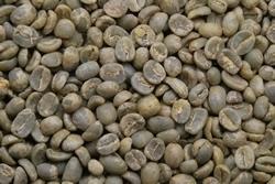 【10㎏】コーヒー生豆 グァテマラ アンティグア ラ・アゾテア農園 SHB 生豆 プレミアムコーヒー カフェ 送料無料