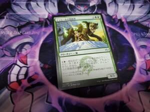 Magic: The Gathering MTG 日本語 ティムールの剣歯虎/Temur Sabertooth FRF 一枚 個数4