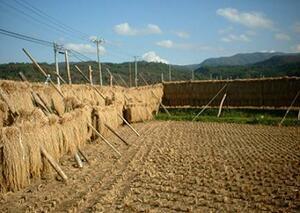 新米 21年産 青森県産 検査1等米 あきたこまち玄米24kg 即決